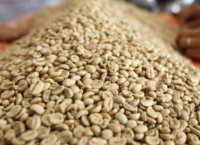Vietnamese robusta coffee prices fall to four-month low, trade at standstill